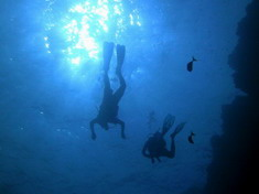 Diving in the Bunaken National Park